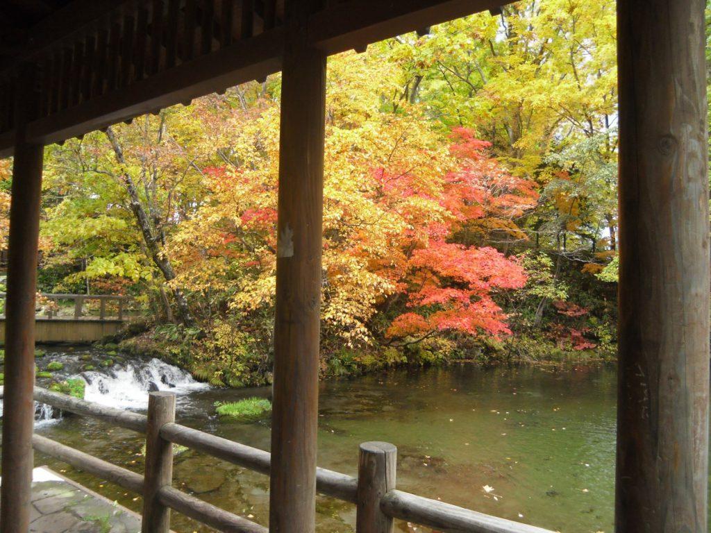 定山渓ダム・朝里川ダム付近の紅葉