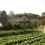 釜山でカメラを盗まれ、携行品損害の保険金で買い替える