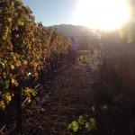 家族のJALマイルを合算して母と2人でアメリカ。カリフォルニアワインの聖地ナパ・ヴァレーの旅!